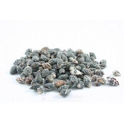 Schelpenhuisjes - Donkergrijs, ca 100 gram